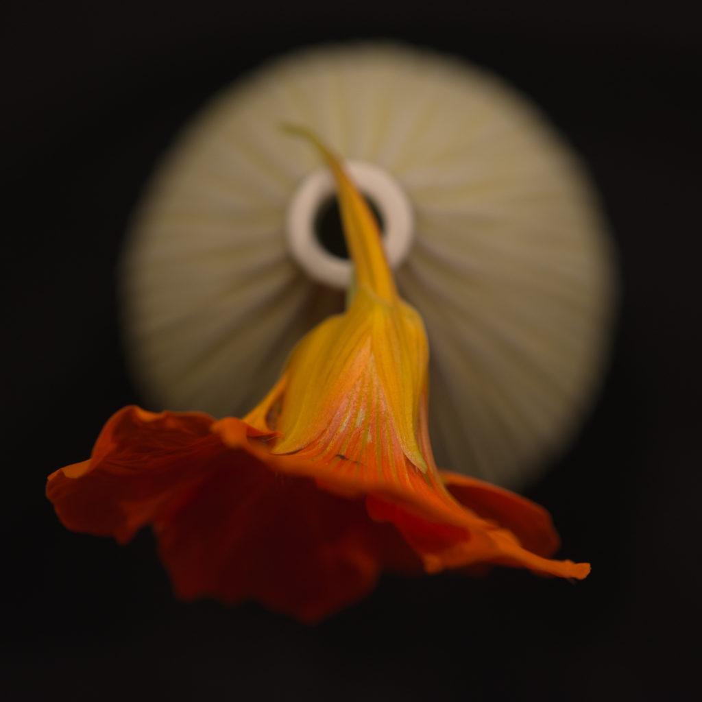 184-blomma